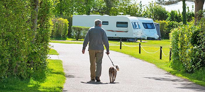 dog-walking-holidays-in-devon