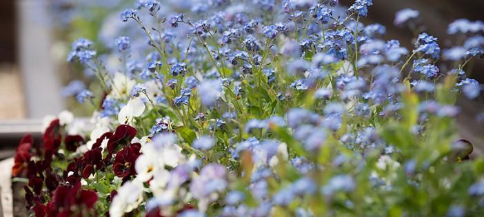 flowers-at-oakdown