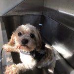 Dog enjoying the 'clean paws' dog wash