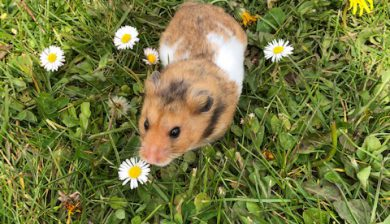 Hamster in the garden